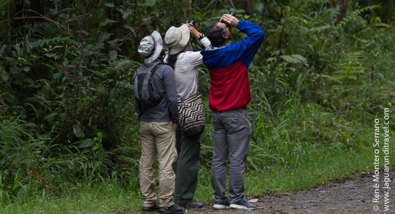 bird tour company colombia