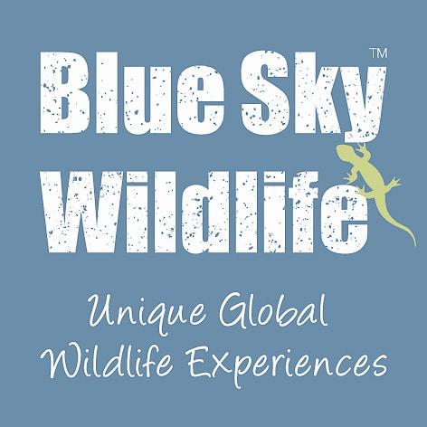 Link Jaguarundi Travel Colombia Wildlife
